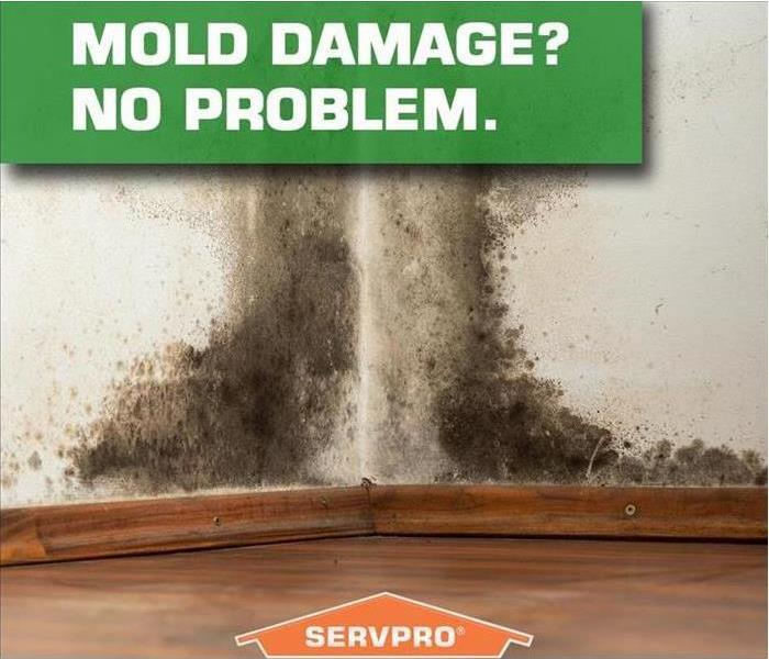Mold Remediation Do You Have Mold?